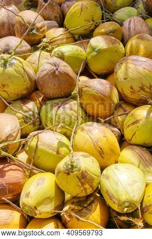 Indonesian Coconut. A Pile Of Coconuts On The Counter. Asian Market. Vegetarian Food. A Natural Prod