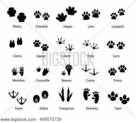 Animals And Birds Feet Tracks, Vector Trails Of Rhino, Cheetah And Hippo, Lion, Leopard And Llama Wi
