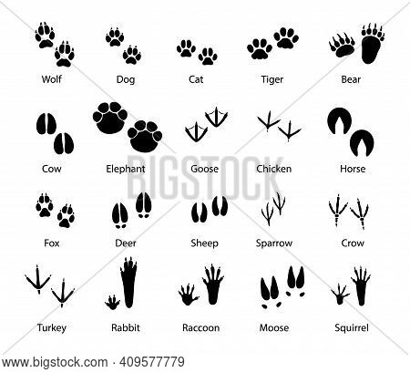 Animals And Birds Feet Tracks, Vector Trails Of Wolf, Dog And Cat, Tiger And Bear With Cow And Eleph