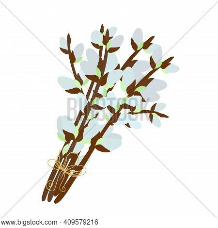 Pussy Willow Branches Bouquet, Willow Tree Twigs Vector Floral Illustration For Spring Holidays Deco