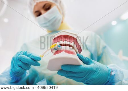 A Model Of A Human Jaw With Teeth And A Toothbrush In The Dentists Hand