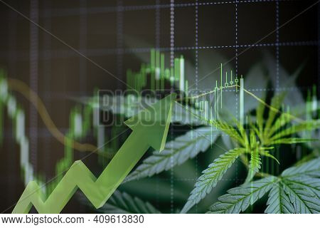 Cannabis Business With Marijuana Leaves And Stock Graph Charts On Stock Market Exchange Trading Anal