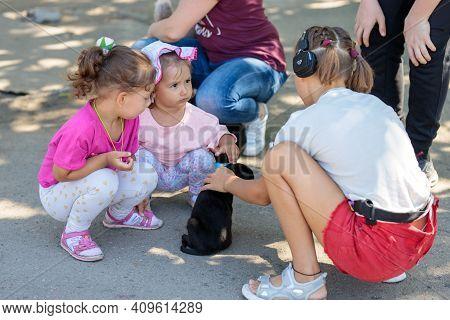 Nikolaev, Ukraine- August 15, 2020: Volunteer Exhibition Of Stray Dogs.  Dog Training, Preparation F