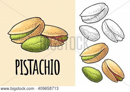 Pistachio Nut With And Without Shell. Vector Engraving Vintage Illustration