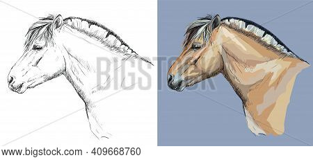 Realistic Head Of Norwegian Fjord Pony. Vector Black And White And Colorful Isolated Illustration Of