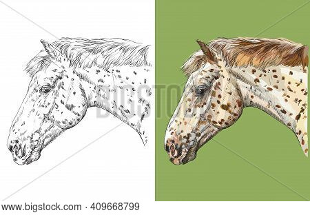 Head Of Spotted Knabstrupper Horse. Vector Black And White And Colorful Isolated Illustration Of Hor