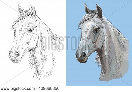 Realistic Head Of Beautiful Arabian Horse. Vector Black And White And Colorful Isolated Illustration