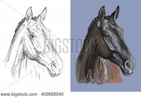Head Of Thoroughbred Horse. Vector Black And White And Colorful Isolated Illustration Of Horse. For