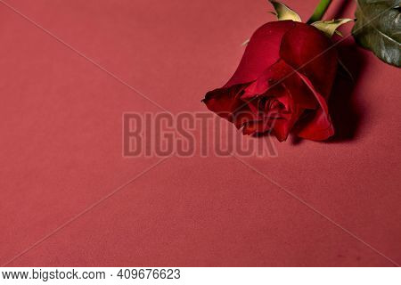 Single Beautiful Red Rose. Love Concept, Shot From Above. Red Background