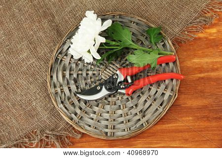 Secateurs with flower on sackcloth on wooden background