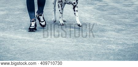 Beautiful Dalmatian And Its Owner Legs On The Pavement. Cute Dog With Brown Spots And Its Master. Da