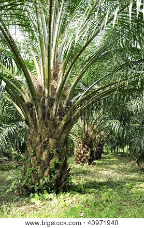 Palm Day Outdoor Farm Crop