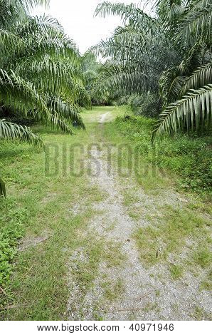 Palm Farm Crop Outdoor Way