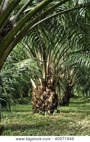 Palm Outdoor Farm Crop Day