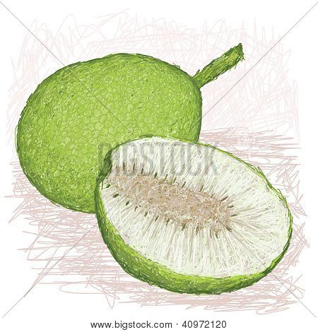 Breadfruit Smooth-skinned Variety Whole And Half Sliced