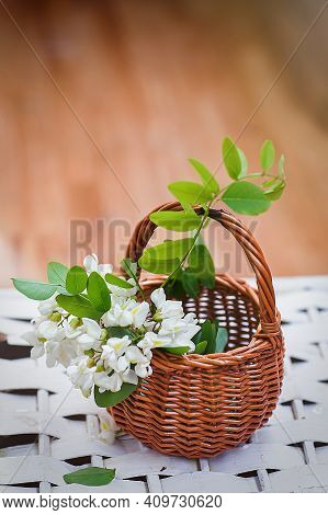 Bunch Of Acacia In Wicker Basket. Collecting Ingredients For Natural Cosmetics From Of Black Locust,