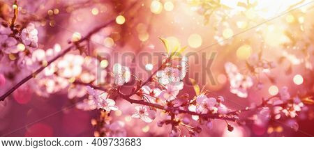 Beautiful Nature Scene with Blooming Tree and Sun Flare. Sunny Day. Spring Flowers. Beautiful Abstract Colored Background. Springtime