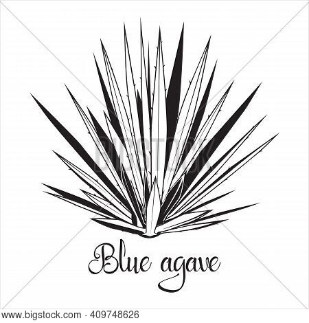 Tequila Agave Black Silhouette. Vector Illustration Isolated On White Background. Blue Agave Succule