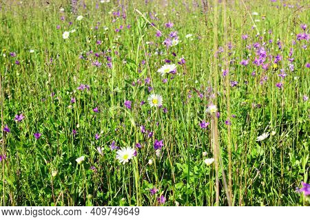 A Beautiful Colorful Meadow Of Wildflowers. Summer. Green Meadow In Sunlight