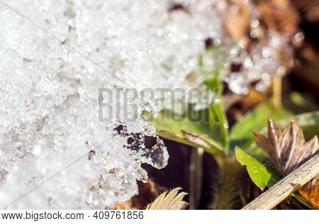 Macro Image Of A Fragment Of Melting Snow On The Grass Of Early Spring. Melting Snow Turns Into Melt