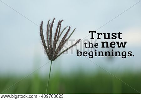 Inspirational Words - Trust The New Beginnings. With Wild Grass Flower On A Blue Sky Background. Mot
