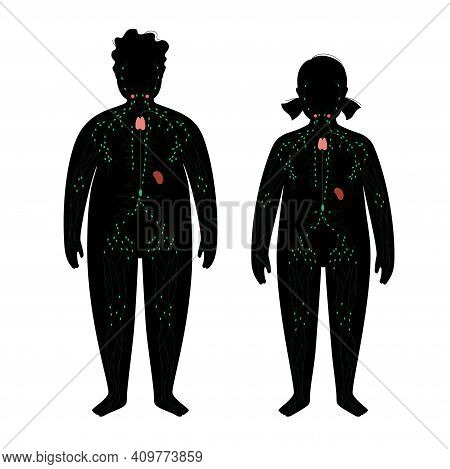 Lymphatic System Concept. Ducts In Obese Child Silhouette. Lymphatic Vessels, Tonsil, Thymus, Spleen