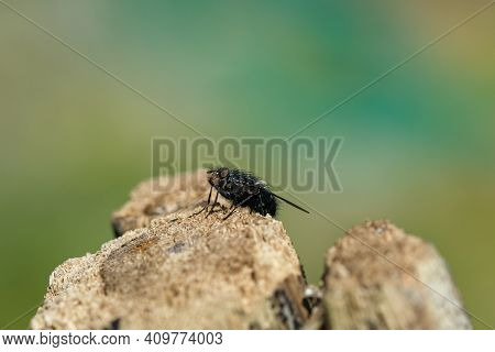Fly Insect Eye And Body Parts Details, Wild Spring Animal Wildlife Nature Closeup