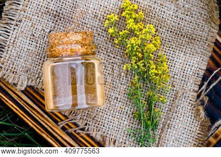Galium Verum, Lady's Bedstraw Or Yellow Bedstraw. Squeezed From Fresh Grass Juice And Diluted For Fu