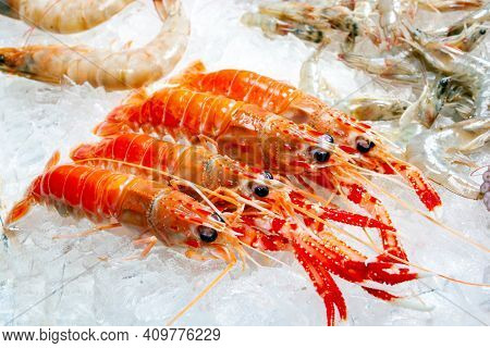 Seafood on ice at the fish market, crayfish