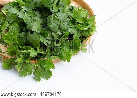 Fresh Coriander Or Cilantro (herb)  Plant Species