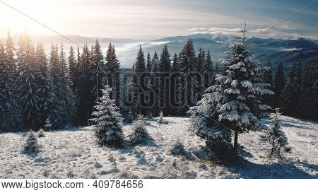 Sun over pine trees at snow mountain closeup aerial. Nobody nature landscape. Spruce forest at hoarfrost. White snowy mount ranges. Winter vacation. Picturesque Carpathians, Bukovel, Ukraine, Europe