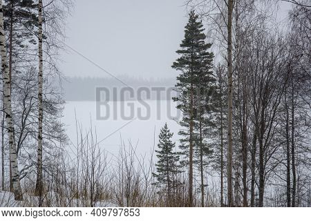 Southern Karelia, Finland, March, 10, 2018. Winter Snowy Forest. Frozen Pine Fir Trees And Spruces C