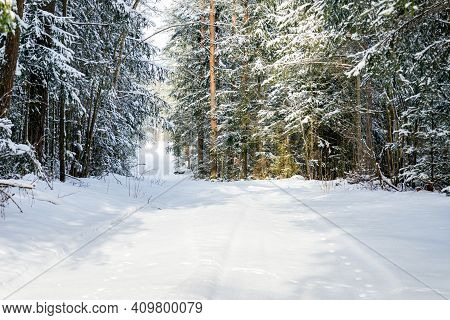 Snowy Trail Path In The Winter Coniferous Forest.cold Sunny Winter Snowy Morning.