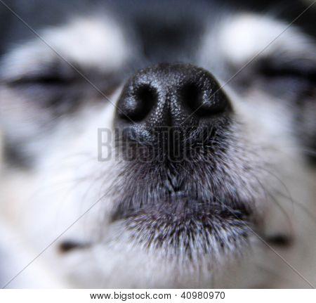 a close up of a dog nose