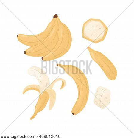 Ripe Banana, Whole And Peeled Banana. Sweet Banana Fruits Vector Hand Drawn Illustration On White Ba