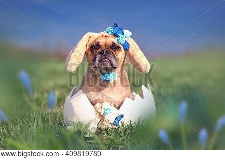 Cute French Bulldog Dressed Up As Easter Bunny Sitting In Giant Egg On Flower Meadow