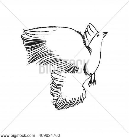 Sketch Flying Bird. Hand Drawn Vector Illustration Isolated. Engraving Sparrow, Titmouse, Swallow In