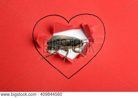 Valentine's Day Promotion Name Roach - Quit Bugging Me. Cockroach And Torn Red Paper With Drawn Hear