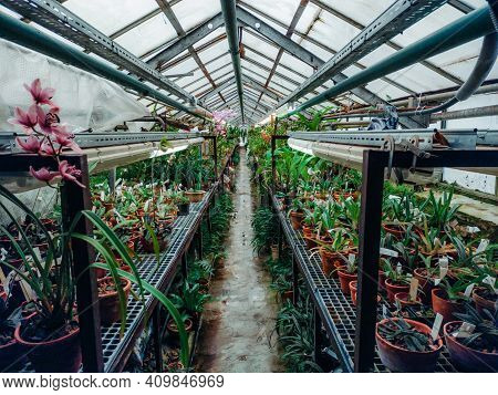 Rows Of Plants In Greenhouse. Many Kinds Of Plants And Flowers In A Greenhouse