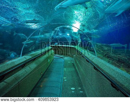 Singapore - 02 Mar 2012: The Tunnel In The Aquarium On Sentosa Island, Singapore