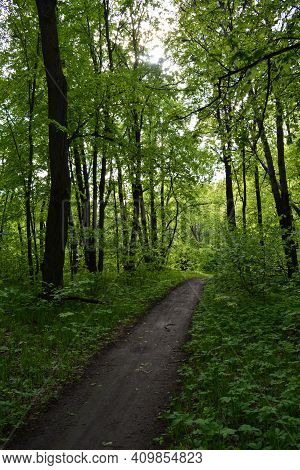 Walking Path In Lush Green Forest In May.