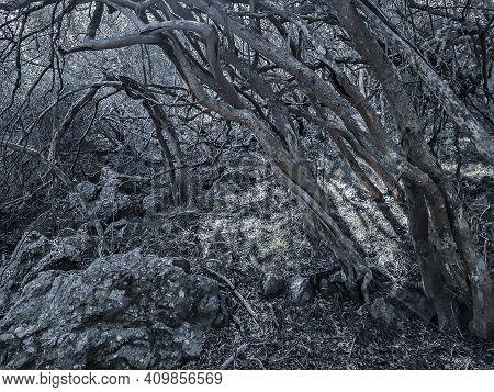 Leafy Forest At De Los Cuervos Hill, Arequita National Park, Lavalleja, Uruguay