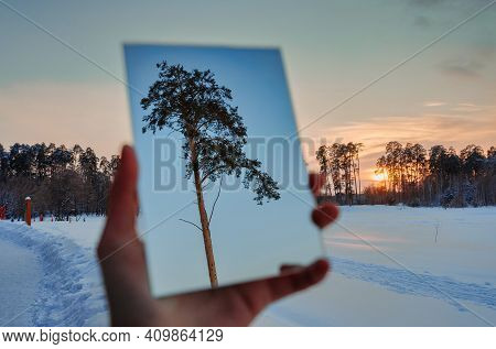 Winter Forest At Sunset. Reflection Of The Sun. The Hand Holds The Mirror. The Pine Tree Is Reflecte