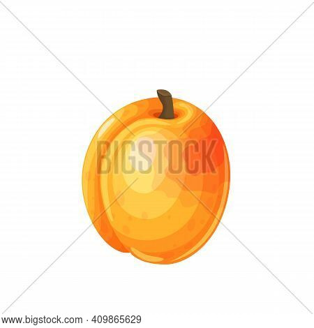 Apricot Fruit Vector Illustration In Cartoon Style. Healthy Nutrition, Organic Food, Vegetarian Prod