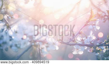 Spring Flowers Blooming Tree and Sun Flare. Beautiful Nature Scene Colored Background. Springtime