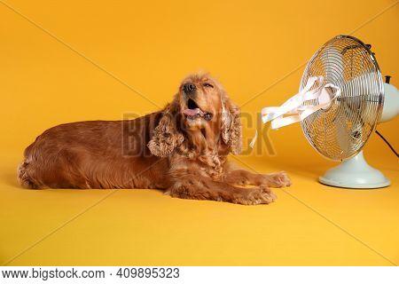 English Cocker Spaniel Enjoying Air Flow From Fan On Yellow Background. Summer Heat