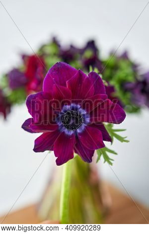 Magenta And Violet Gradient Poppies Anemones. Many Flowers - Great Background. The Work Of The Flori