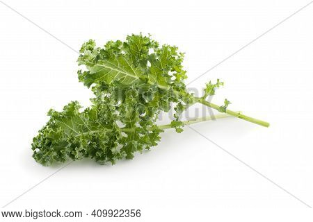 Kale Isolated On A White Background Kale