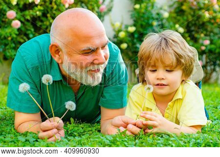 Grandfather And Grandson Playing Outdoors With Dandelions. Child With Grandfather Dreams In Summer I