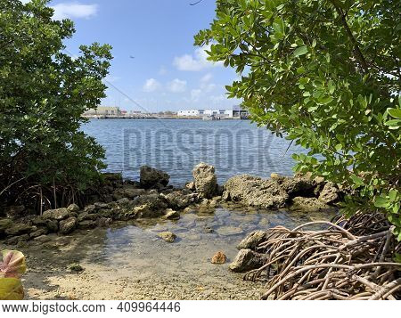 mangrove Roots At Dr. Von D. Mizell-eula Johnson State Park In South Florida